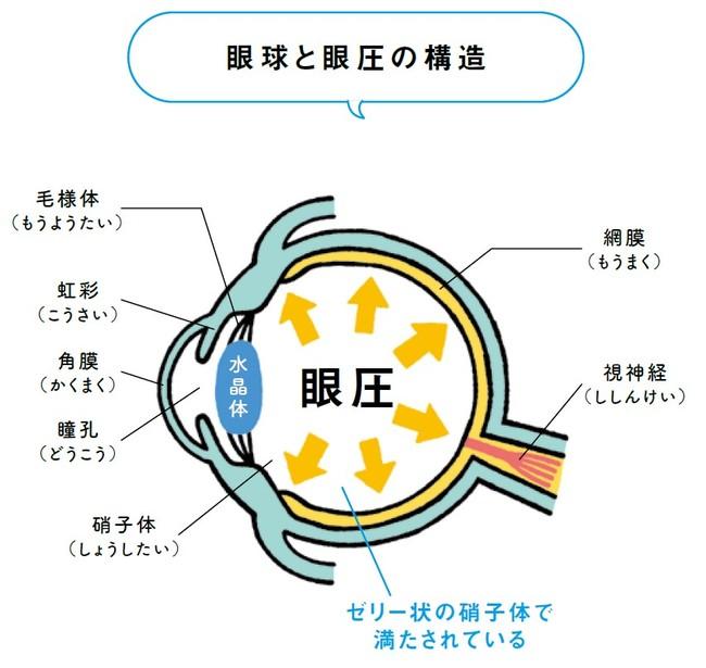「眼圧」が正常であれば目の健康が保たれる