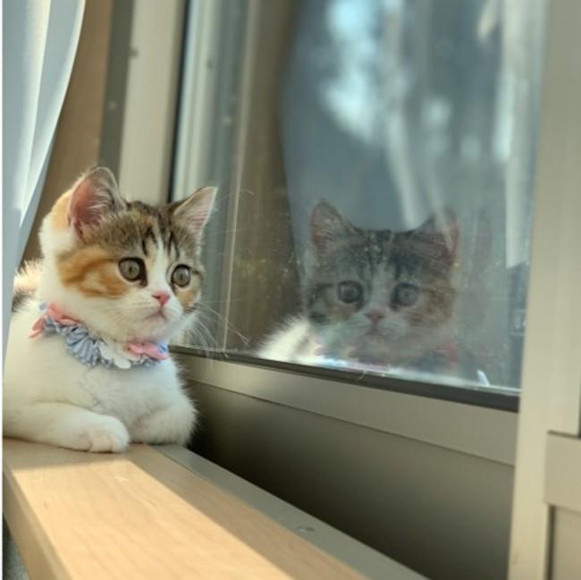 """2月22日(月)は「猫の日」~ 2代目""""にゃんバサダー""""発表!今年は ..."""