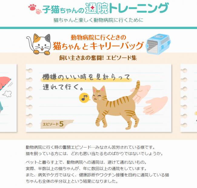 子猫ちゃんの通院トレーニング
