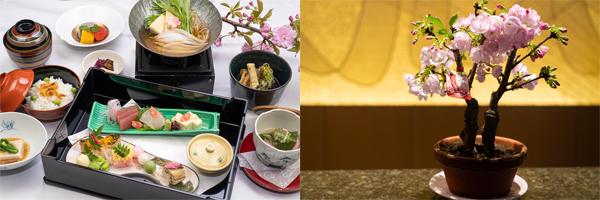 期間限定「さくら会席」(左)と、プレゼントに用意している盆栽「だいごこばち」(右)