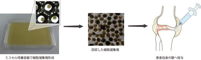 図3:細胞凝集塊の関節内注射投与イメージ