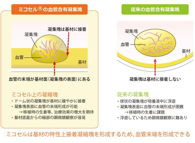 図1:ミコセル上の血管含有細胞凝集塊の特徴