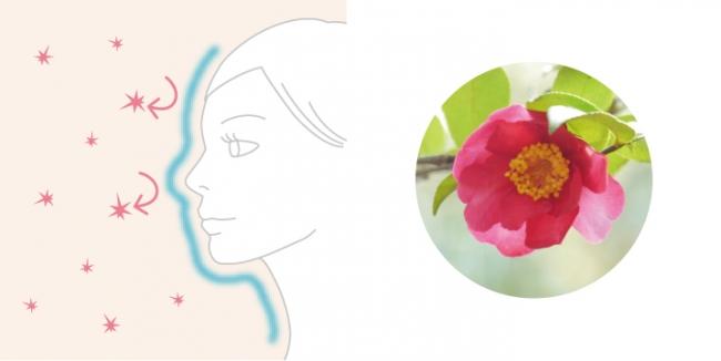 (右の画像)ツバキ花エキス