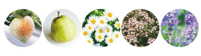 左から、フラガリアチロエンシス果汁(整肌成分)、乳酸桿菌/セイヨウナシ果汁発酵液(整肌成分)、ヒナギク花エキス(整肌成分)、タチジャコウソウ花/葉エキス、ラベンダー花エキス
