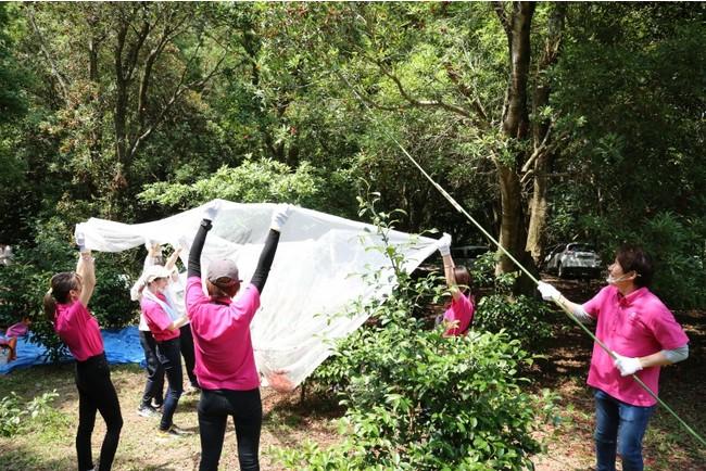 大きい木は5mほどあり、実はネットで収穫
