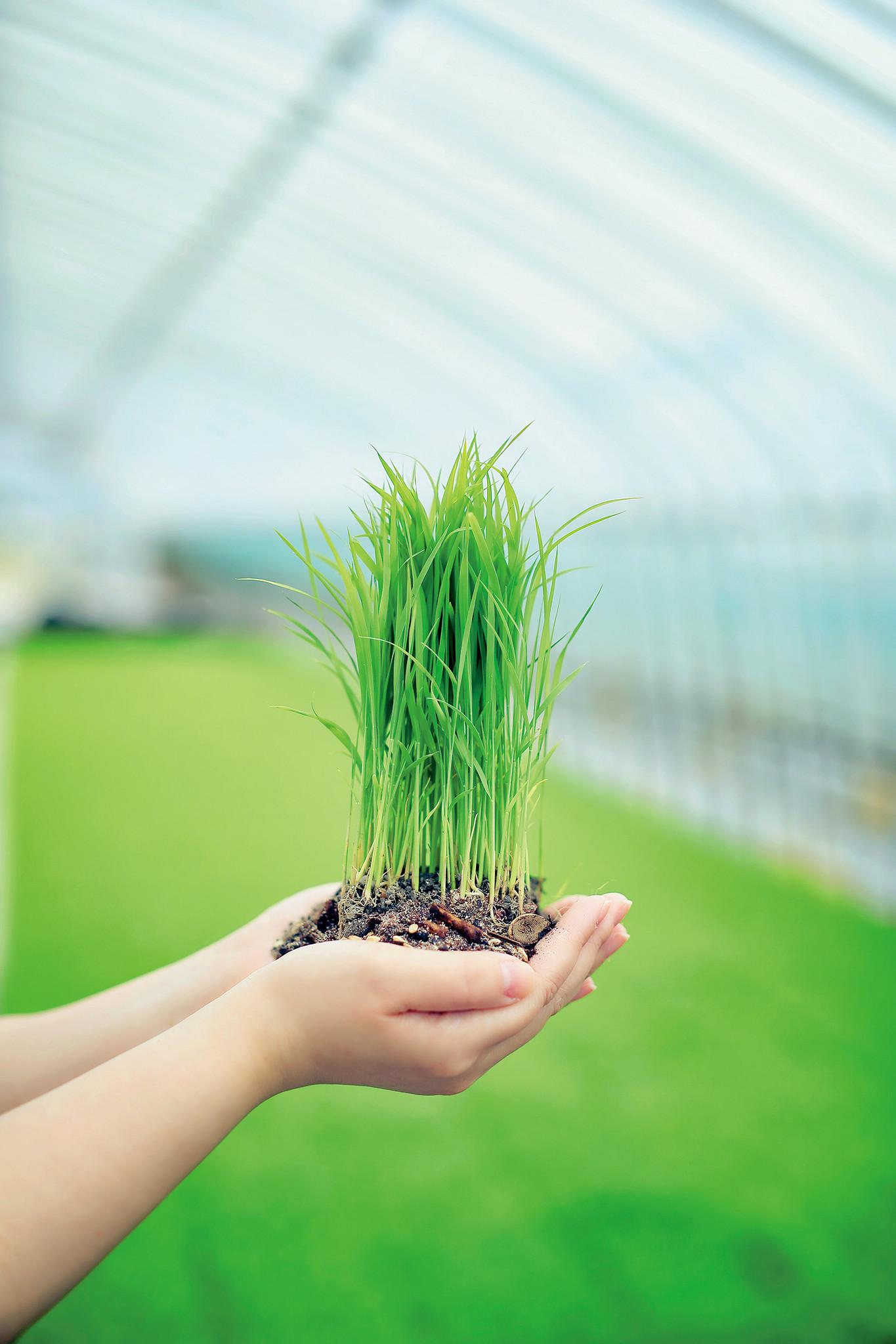 ~食品ロス堆肥で作ったお米を初収穫~ お米の循環型産業プロジェクト本格始動