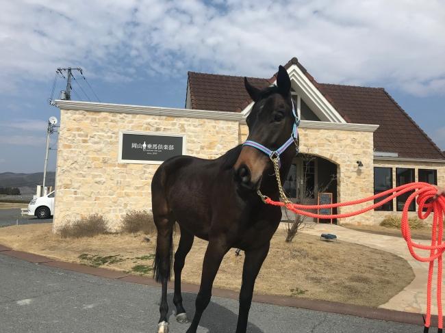 支援馬に決定したゲヴュルツの写真 馬具は中江物産(兵庫県神戸市)より提供された