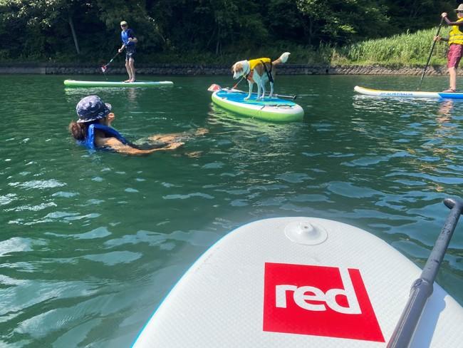水遊び感覚で楽しめるDOGサップコース