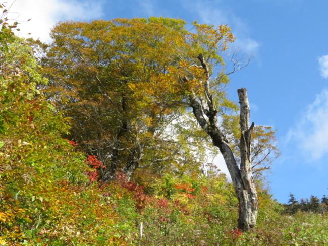 山頂駅付近の紅葉