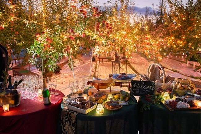 一度は訪れたい。幻想的な夜の果樹園