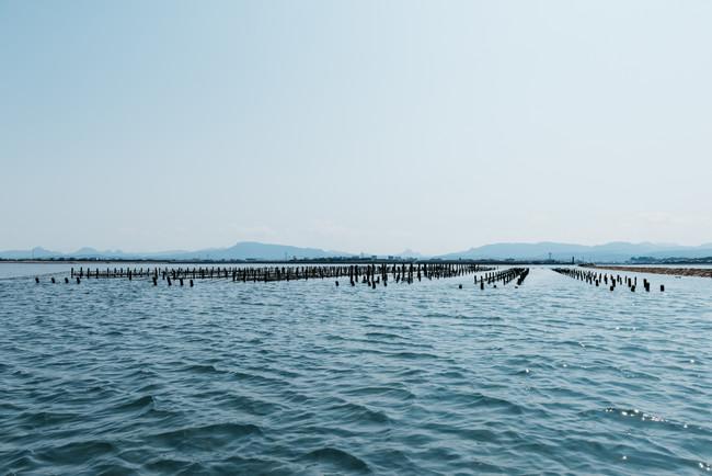 広大な中津干潟で養殖されるひがた美人