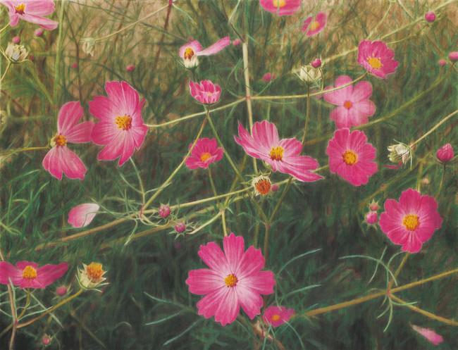 《コスモス》2000-07 色鉛筆・墨/紙