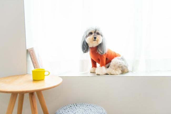 愛犬の普段着に、サラッときもちいい伸縮ドッグシャツ。