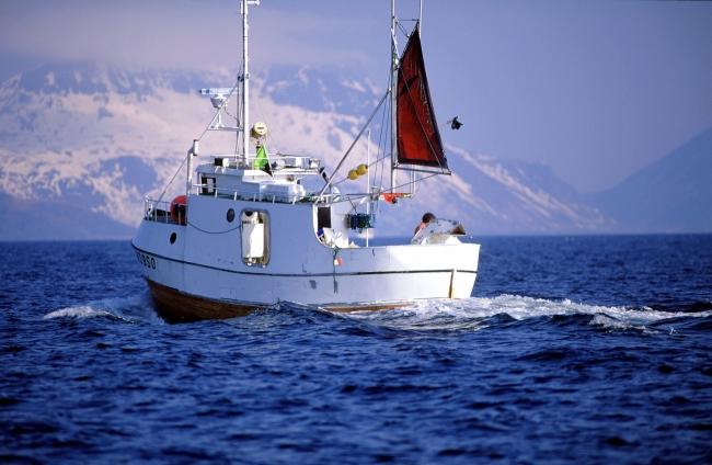 ノルウェー水産物審議会(nsc)提供