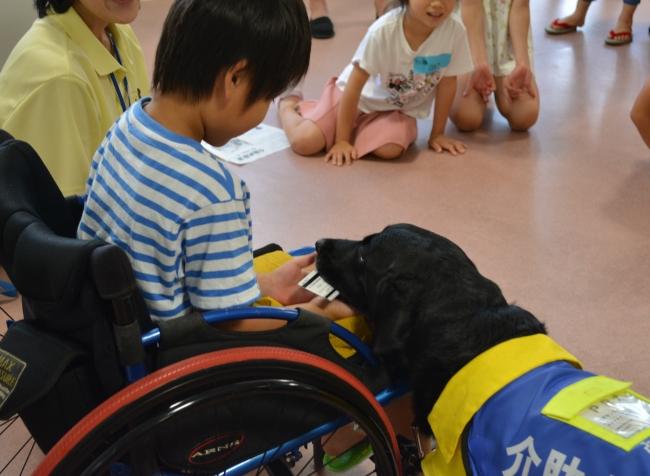 介助犬教室の様子(PR犬に指示を出す体験)体験を行うことで子どもたちは「手や足に障がいがあり困ることは何か」を想像しやすくなる