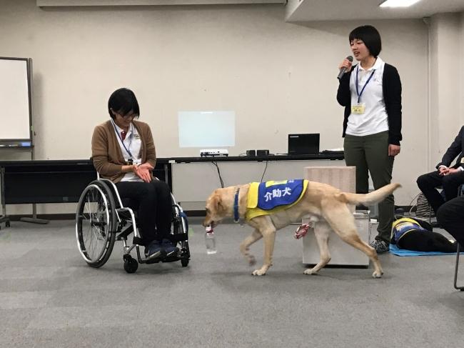 Instagramライブ配信予定の介助犬デモンストレーション