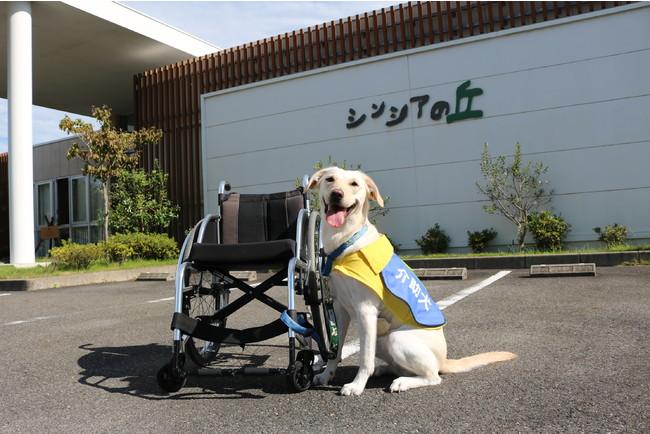 介助犬総合訓練センター~シンシアの丘~