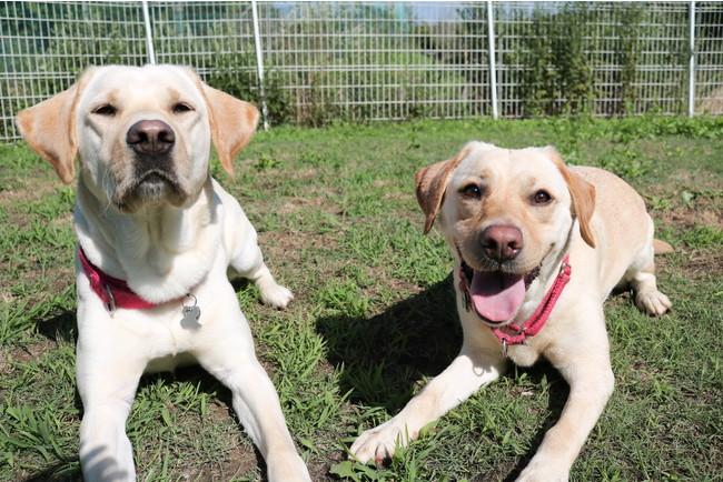 ながくてふるさと寄附金『介助犬にならない犬達の活躍育成支援』