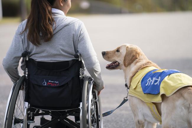 車いすの横を歩く介助犬