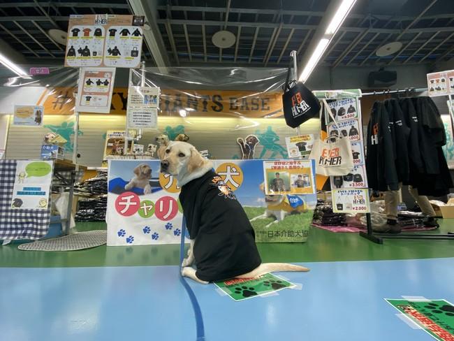 東京ドームでの出展の様子