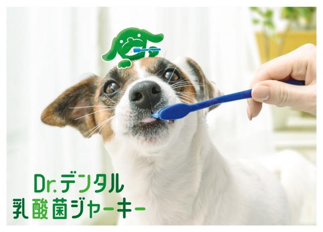 広告ビジュアル_1・デンタルケアサポートジャーキー