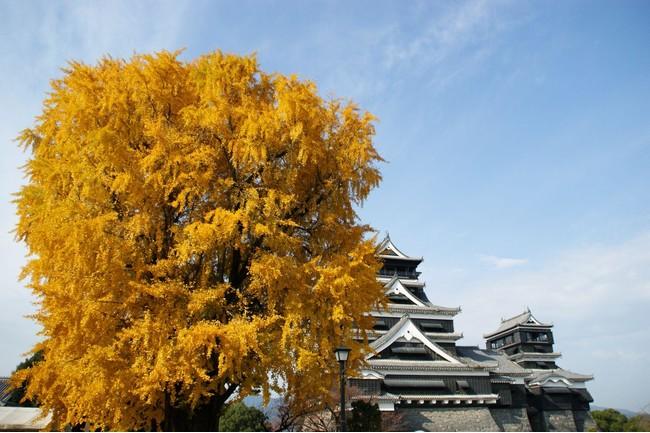 写真提供:熊本城総合事務所