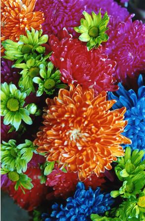 蜷川実花《FLOWER ADDICT》(2009) C-print mounted on plexiglas (C)mika ninagawa, Courtesy of Tomio Koyama Gallery