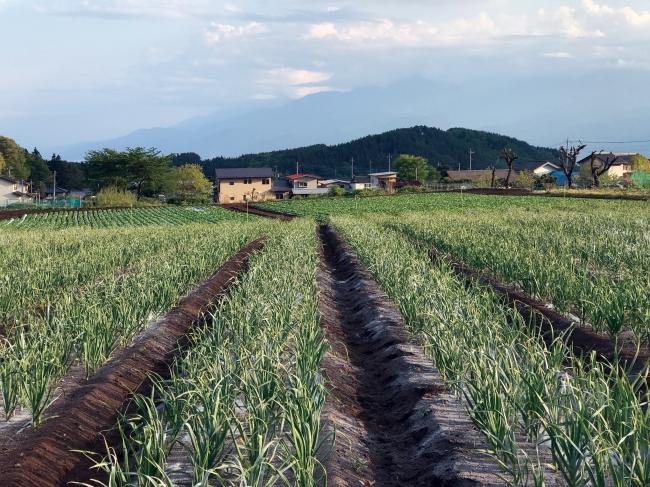 ※農場イメージ