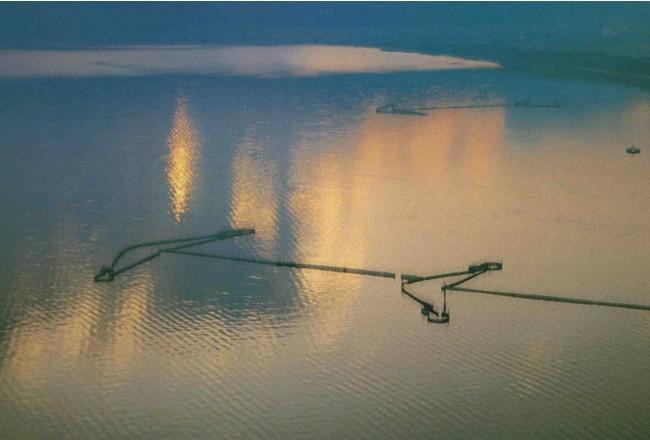 琵琶湖のエリ