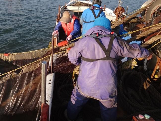 沖びき網漁の様子