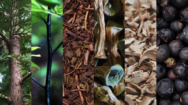 写真左から:アテビ、クロモジ、村上茶(ほうじ茶)、ドライアップル(芯)、アンジェリカルート、ジュニパーベリー