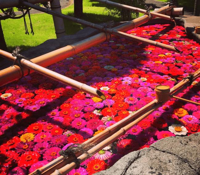 牛久大仏 7月お手水の花