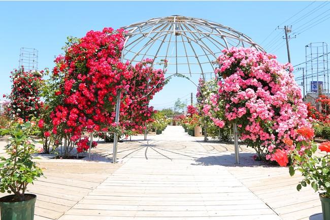 広さ2000平方メートル  100種類のバラが咲くバラ園入口