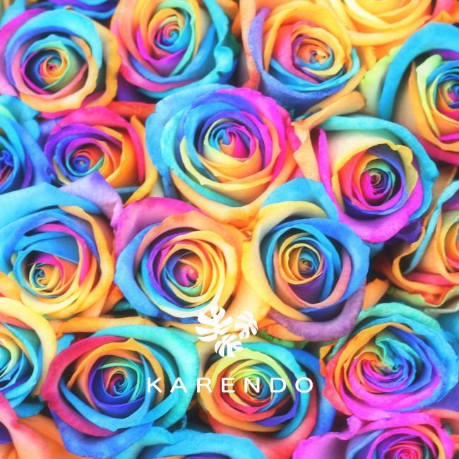 レインボーバラ花言葉「無限の可能性」