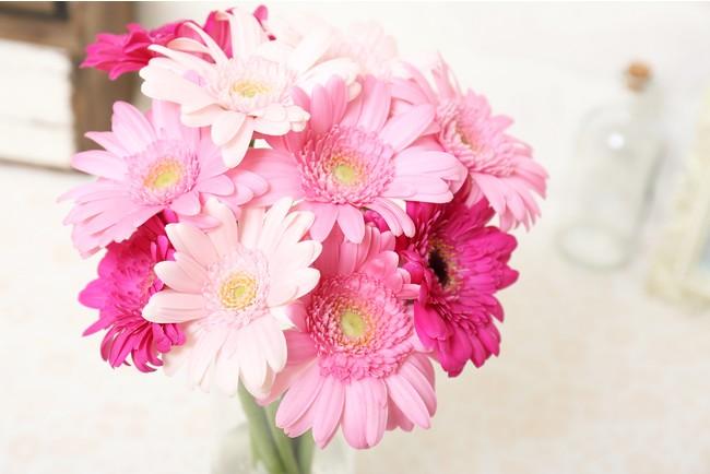 karendo店頭で年間30万本売れている「ガーベラ」のお花