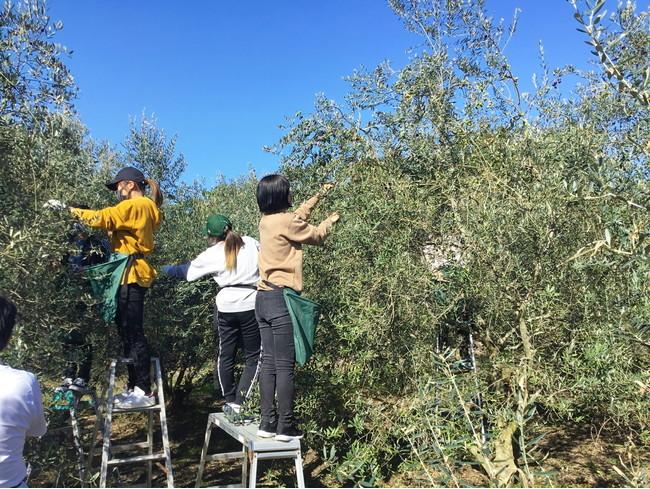 ▲今年も子供から大人まで幅広い世代の方々が収穫体験をしました。