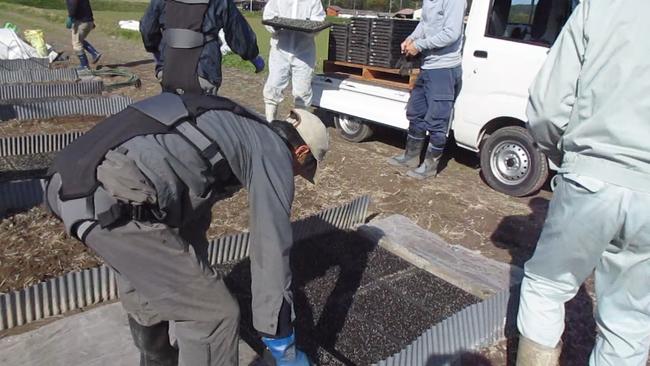 DARWING Hakobeludeを装着して苗箱の運搬作業を行う米生産者