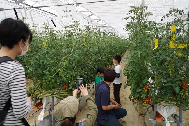 大人も子供も楽しめる収穫体験