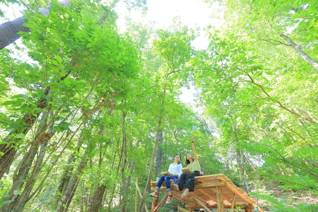 自然のなかでリフレッシュ。森のテラス