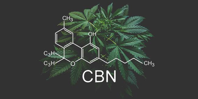 CBD とは異なる体感・作用で人気のCBN