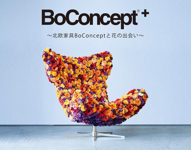BoConcept+