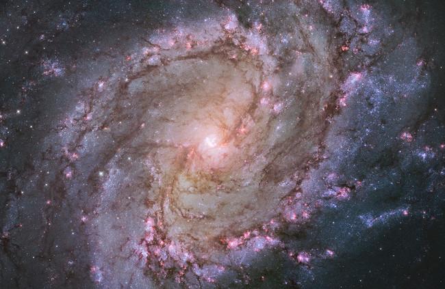 「南天の回転花火銀河」とも呼ばれる棒渦巻銀河M83 の中心付近 ハッブル宇宙望遠鏡による観測