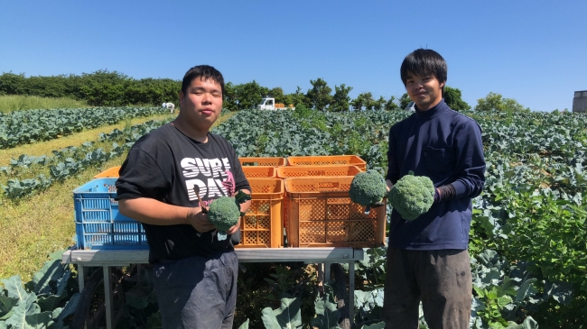 ブロッコリー栽培を学ぶ若手農業者たち