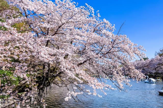桜がパッと咲き、さらり散ると、美しい新緑の季節がやってきます。