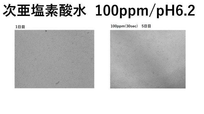 検証結果2次亜塩素酸水