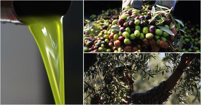 プロヴァンスで丁寧に手摘みされた新鮮なオリーブを絞った最高品質のエキストラバージンオリーブオイル