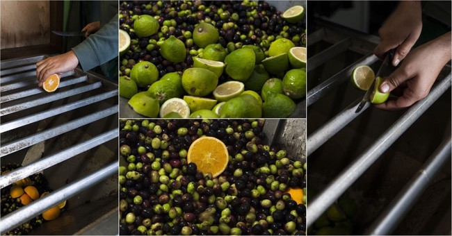 フレーバーエキストラバージンオリーブオイルシリーズ:後からフレーバーを添加するのではなく、果実や植物をオリーブの実と一緒に圧搾することで抽出したフレッシュな芳香が、オリーブ本来の奥深い香りに自然な風味として馴染み、お料理の味を引き立てます。