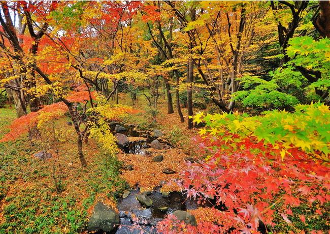 北の丸公園 東京大回廊写真コンテスト入賞作品 「北の丸公園紅葉」増田ヒロ子