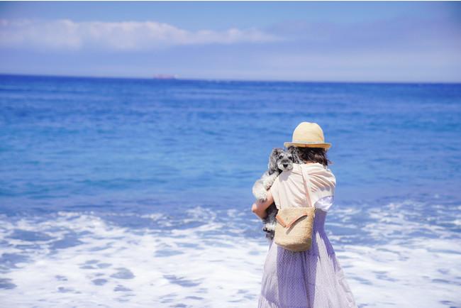 海岸沿いを愛犬とともにゆっくりとお散歩