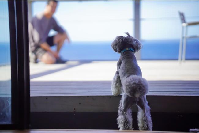 室内から海を一望できるテラスに愛犬も大喜び